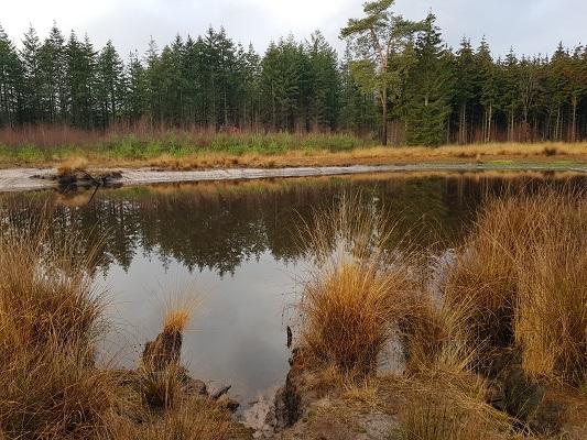 Vennen bij Stiphoutse Bossen tijdens een IVN-wandeling bij Stiphout in Noord-Brabant