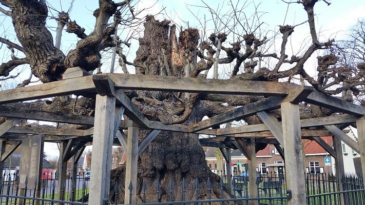 Oude boom tijdens een wandeling in het spoor van Van Gogh in Nuenen