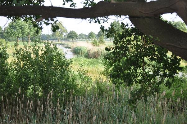 Doorkijkje naar nieuwe natuur tijdens wandeling langs riviertje de Leijgraaf van Boekel naar Middelrode