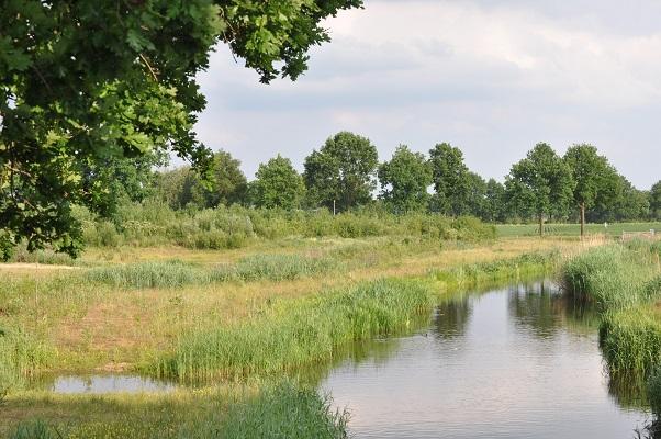 Nieuwe natuur langs riviertje tijdens wandeling langs riviertje de Leijgraaf van Boekel naar Middelrode