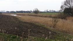 Oude Maasje bij Drongelen tijdens een wandeling over het Maaspad van Waspik naar Waalwijk