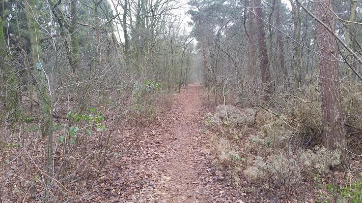 Wandelen over het Marikenpad in de bossen van Kruisstraat