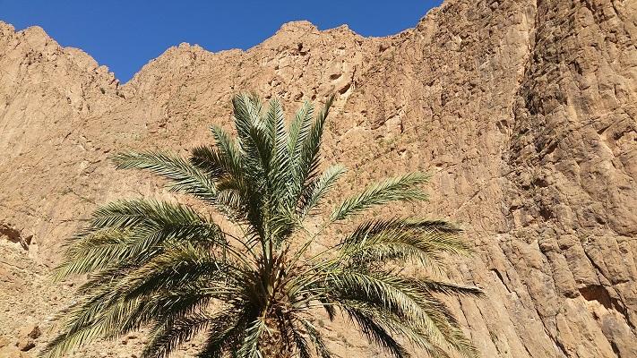 Berglandschap met palmboom tijdens wandelreis in Marokko