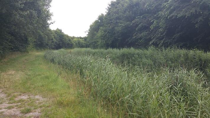Marnebos op een wandeling van Lauwersoog via Niekerk naar Ulrum over het Nederlands Kustpad