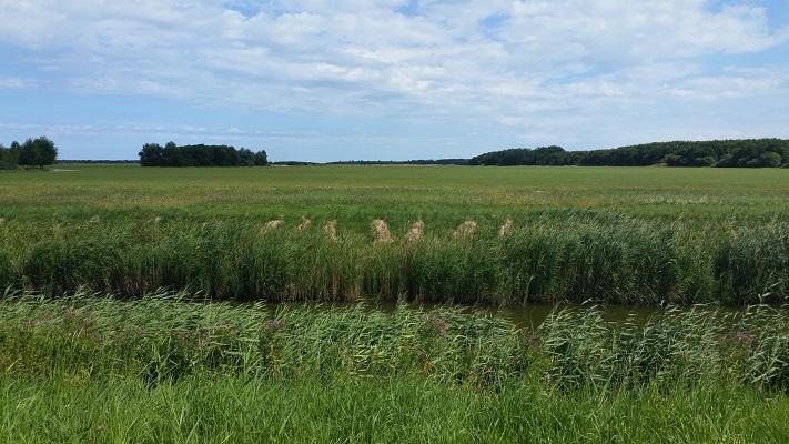 Westpolder op een wandeling van Lauwersoog via Niekerk naar Ulrum over het Nederlands Kustpad