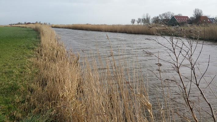Molkfaert tijdens een wandeling over het Nederlands Kustpad van Makkum naar Harlingen