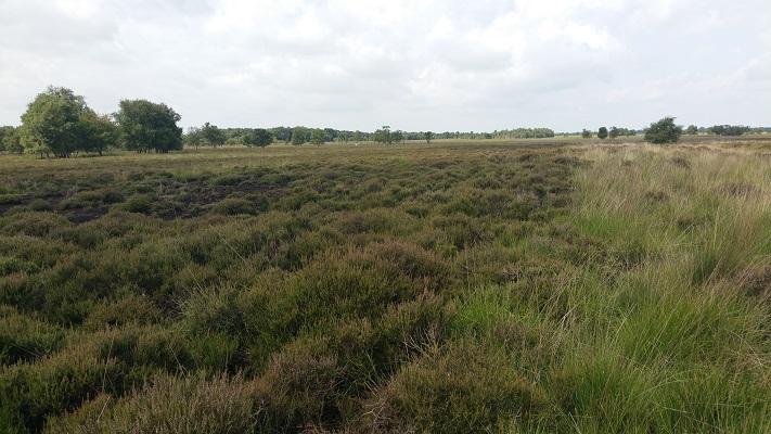Bargerveen op een wandeling van Klazienaveen naar Schoonebeek over het Noaberpad