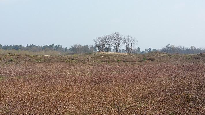 Wandelen over het Peelpad in de Heere Peel