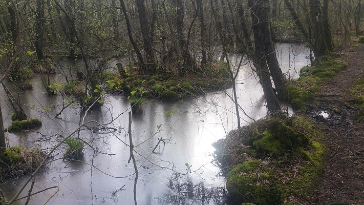 Wandelen over het Peelpad bij de Castenrayse Vennen