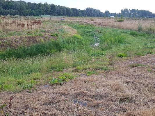 Wandelen over het Peelpad bij de Molenbeek