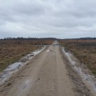 Wandelen over het Peelpad in de Groote Peel bij Ospeldijk