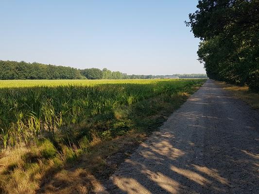 Wandelen over het Peelpad op pad richting Heibloem