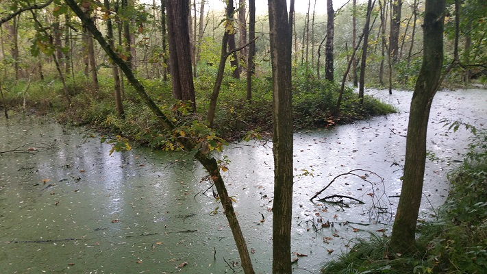 Wandelen over het Peelpad bij het Starkriet in Heusden