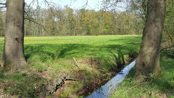 Wandelen over het Peelpad in De Rips