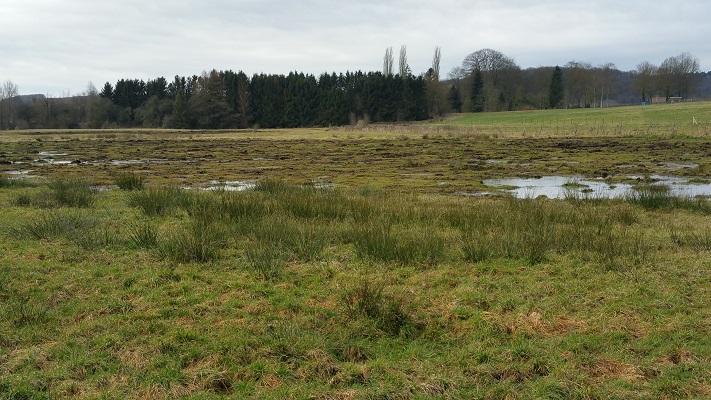 Wandelen over het Peerkepad in de voetsporen van Peerke Donders in natuur bij de Eyserbeek