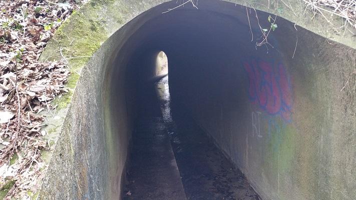 Wandelen over het Peerkepad in de voetsporen van Peerke Donders in tunneltje onder spoorlijn Geulle