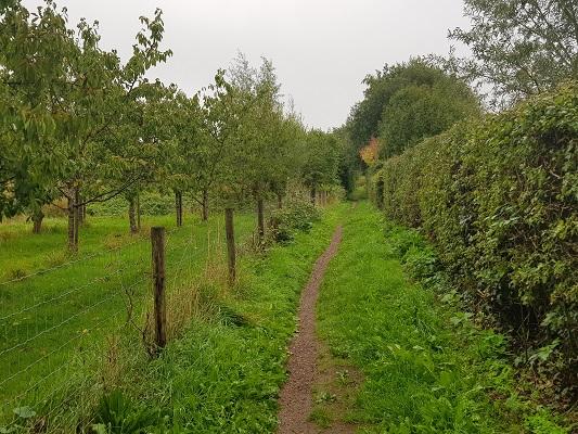 Wandelen over het Romeinse Limespad op wandelpad bij Wijk bij Duurstede