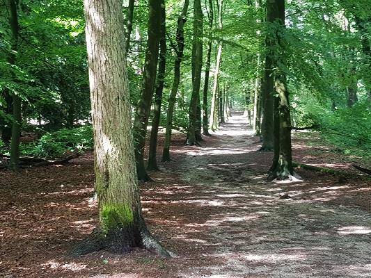 Wandelen over het Romeinse Limespad in de bossen bij Nijmegen