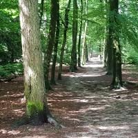 Noaberpad - Klazienaveen-Emmen - Over niet afgegraven hoogveen