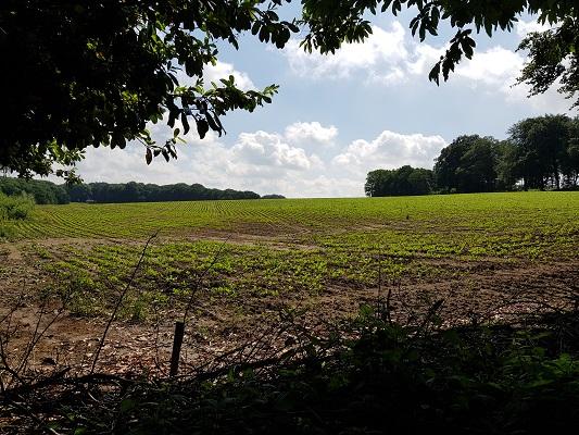 Wandelen over het Romeinse Limespad in Berg en Dal