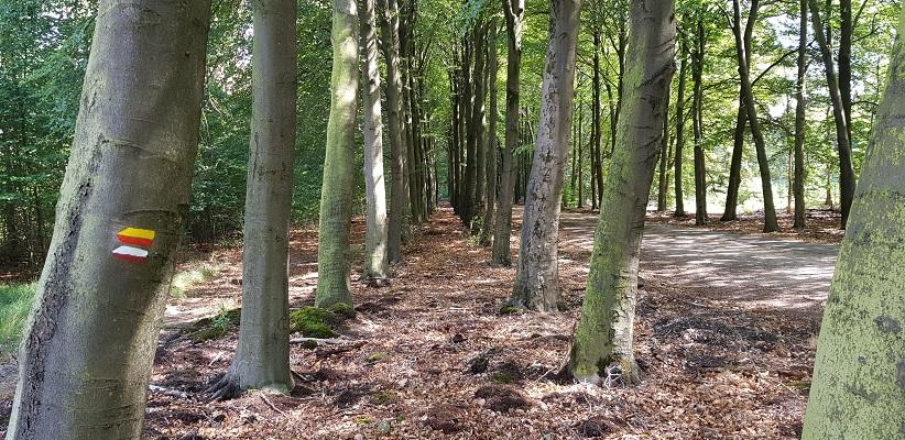 Bossen Hoenderloo op een wandeling over het Roots Natuurpad van Apeldoorn naar Hoenderloo
