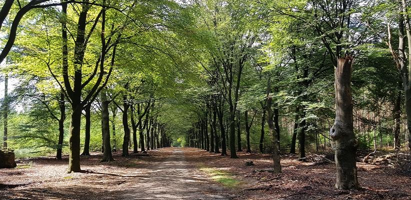 Hoog Buurlo op een wandeling over het Roots Natuurpad van Apeldoorn naar Hoenderloo