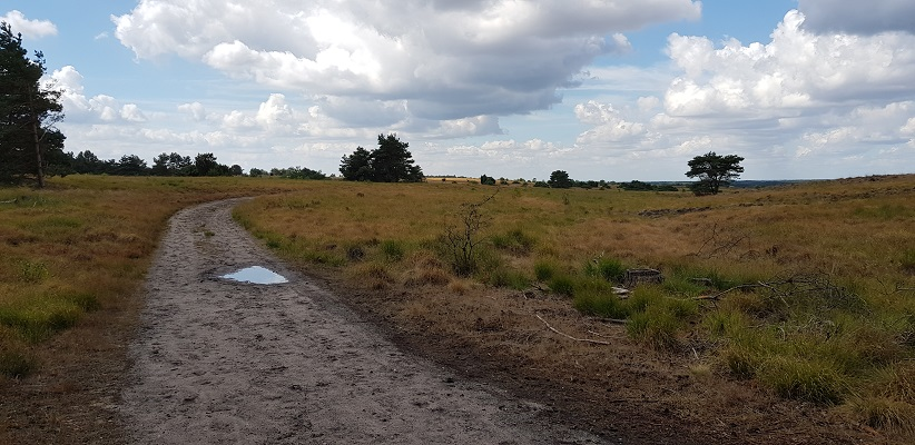Buurlose Heide op een wandeling over het Roots Natuurpad van Apeldoorn naar Hoenderloo