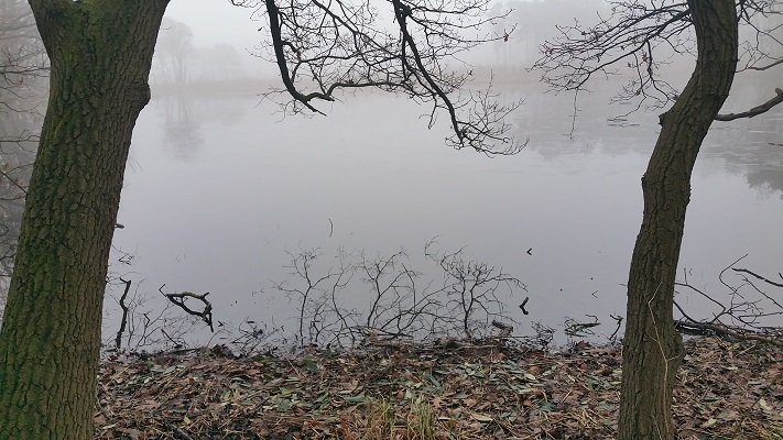 Haneven op een wandeling over het Roots Natuurpad van Biest-Houtakker naar Gorp