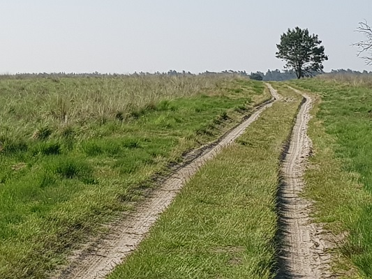 Deelense Veld bij Nationaal Park de Hoge Veluwe op een wandeling over het Roots Natuurpad van Hoenderloo naar Schaarsbergen