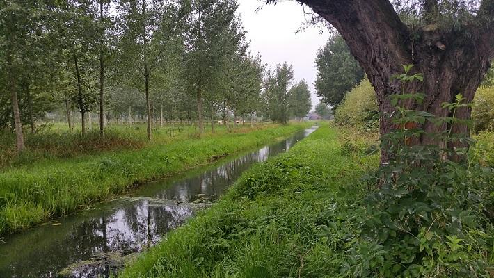 Beek Wijboschbroek op wandeling over het Roots Natuurpad van Schijndel naar Veghel