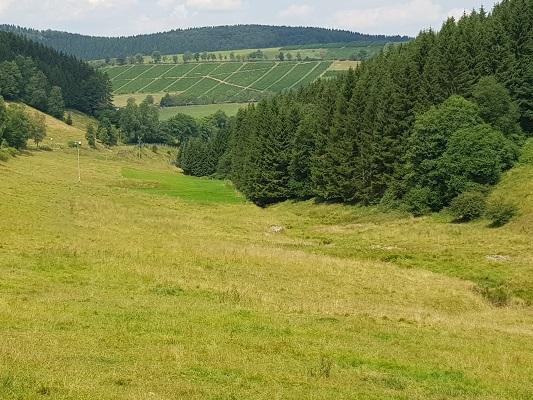 Landschap met wijngaarden tijdens wandeling van Kahler Asten naar de Hoheleyehutte over de Rothaarsteige in Sauerland in Duitsland