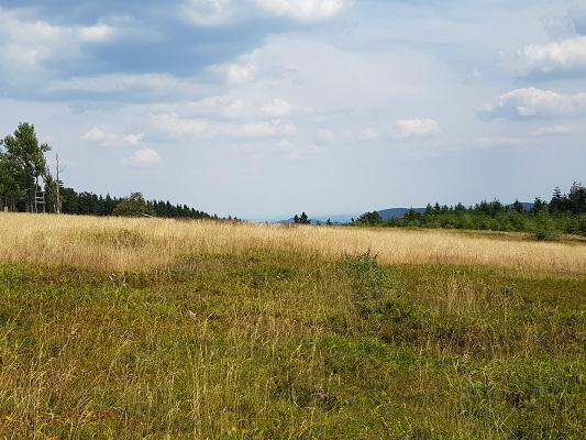 Heideveld op Kahler Asten tijdens wandeling van Kahler Asten naar de Hoheleyehutte over de Rothaarsteige in Sauerland in Duitsland