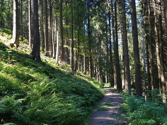 Bosweg naar Kahler Asten op wandeling van Winterberg naar Kahler Asten tijdens wandelreis over Rothaarsteige in Sauerland in Duitsland