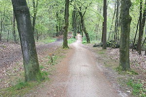 Bosweg tijdens een wandeling over het Veluwe Zwerfpad