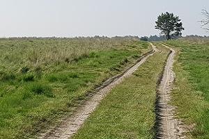 Landweg over heide tijdens een wandeling over het Veluwe Zwerfpad
