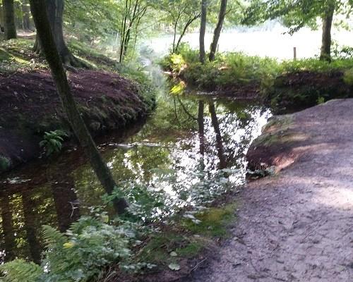 Beek bij Ecoduct Jac. P. Thijsse op een wandeling over het Veluwe Zwerfpad van Wolfheze naar Renkum