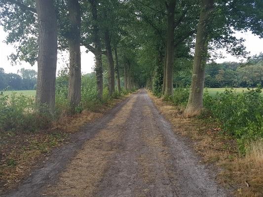 Wandelen over het Westerborkpad van 't Harde naar Elburg bij lange laan
