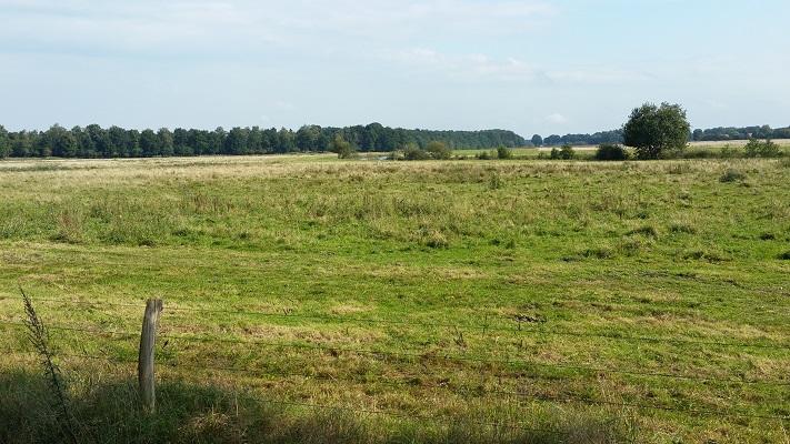 Gebied rond Ruiten Aa op wandeling over Westerwoldepad van Sellingen naar Vlagtwedde