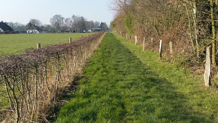 Wandelpad tijdens wijnwandeling van Wanda Catsman in Groesbeek