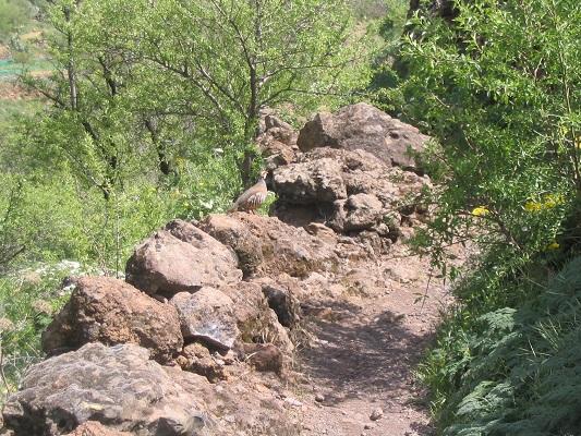 Wandelpad van Barranco de Guaydeque naar Montana las Tierras tijdens een wandelvakantie op Canarisch Eiland Gran Canaria
