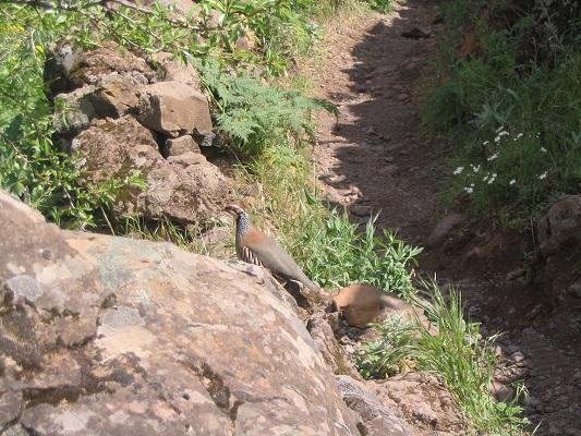 Vogel gespot tijdens wandeling van Barranco de Guaydeque naar Montana las Tierras tijdens een wandelvakantie op Canarisch Eiland Gran Canaria