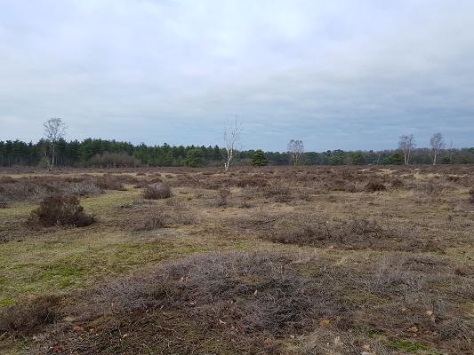 Slabroekse Heide tijdens IVN-wandeling Bernhoven in Uden