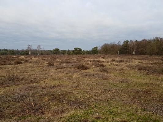 Slaboekse Heide tijdens IVN-wandeling Bernhoven in Uden