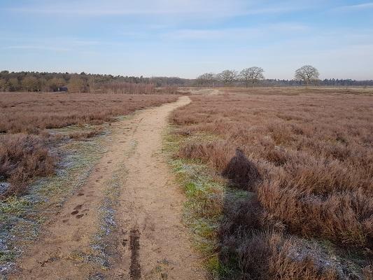 De Renkumse Heide op een wandeling over Klompenpad Molenbeeksepad bij Renkum