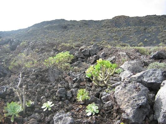 Lavavelden tijdens een wandelvakantie op Canarisch eiland La Palma