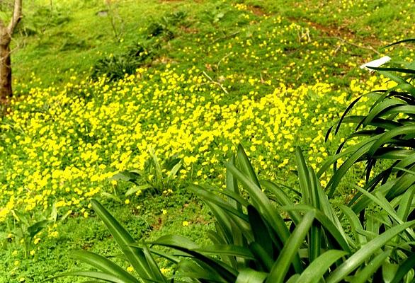 Bloemenpracht bij Levada do Norte op wandelvakantie op Portugees eiland bloemeneiland Madeira