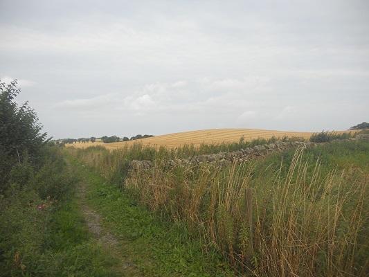 Wandelpad tussen graanvelden op een wandeling van Wallsend naar Heddon on Wall op een wandelreis over de Muur van Hadrianus in Engeland