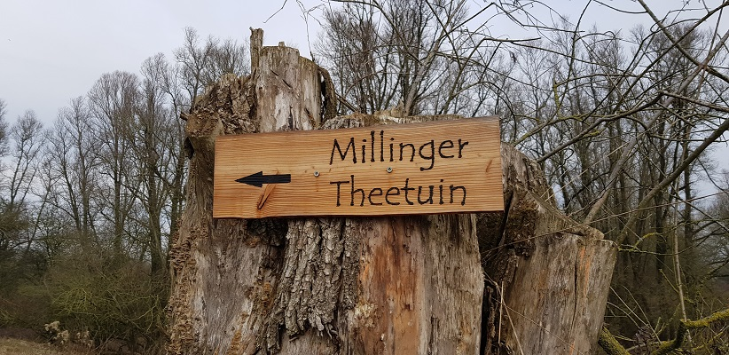 Millinger Theetuin op IVN-wandeling door de Millingerwaard