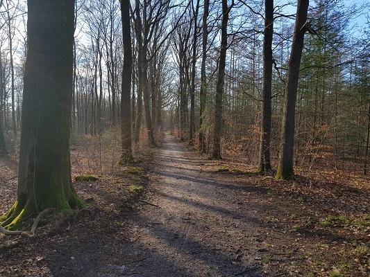 Bossen Goois Natuurreservaat tijdens een NS-wandeling Landgoed Groeneveld van Baarn naar Hilversum