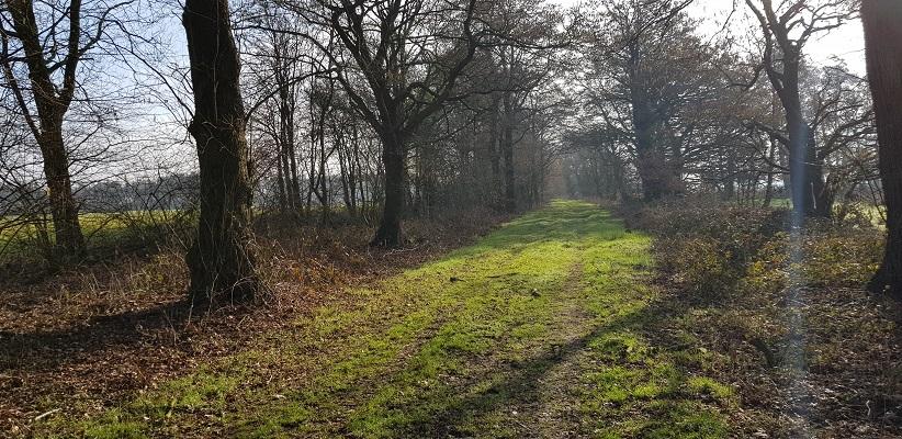 Zandweg op wandeling over het Roots Natuurpad van Papenvoort naar Hooghalen